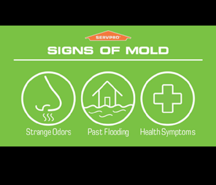 Is Mold Lurking In Your Home?