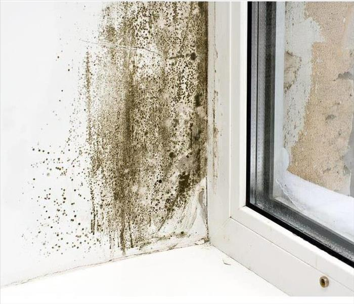 Mold Remediation If You Suspect Mold in Your Torrington, CT Home, Take These Steps