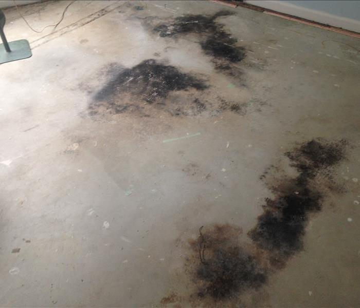 Mold Remediation 10 Things to Know About Mold