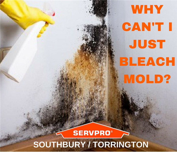 Mold Remediation Does Bleach Kill Mold Found in Your Home?